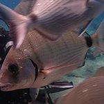 Φωτογραφία: The Aegean Pro Dive Centre