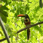 Saw a rad toucan!