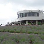 Photo of Hinode Park