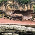 Foto di Hannover Zoo