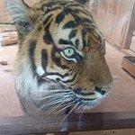 Фотография South Lakes Safari Zoo