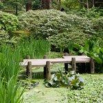 Φωτογραφία: Nitobe Memorial Garden