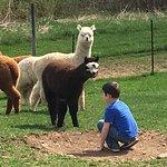 Kendall Creek Farms Alpacas