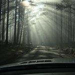 Photo of Tree Adventures