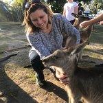 Bilde fra Horizons Kangaroo Sanctuary