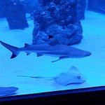 Фотография Aquarium Pula
