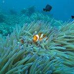 Photo of Bali Dive Cove