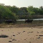 Photo of Yala National Park