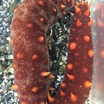 Ohhh...sea cucumbers!