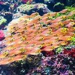 Marine life inside sea aquarium, Sentosa Island