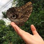 Bilde fra Butterfly House Sardegna