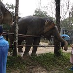 One of the elephants we were lucky to meet and feed