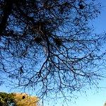 Foto de Florestal Orchard of Sao Paulo
