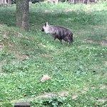 Photo of Prague Zoo