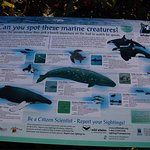 Bild från West Coast Aquatic Safaris