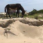 Foto Wild Horse Adventure Tours