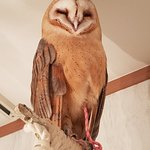 Photo of Owl cafe Akiba Fukurou