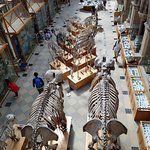 Photo of Oxford University Museum of Natural History