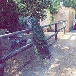 Bilde fra Parc de Figuerolles