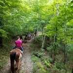 Bilde fra Smoky Mountain Riding Stables