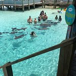 We swam with sharks!