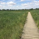 Walk through the reed beds