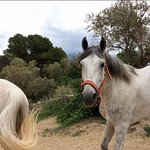 After our trip Kalle letl his beautiful horses loose