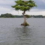 Photo of Scenic Boat Tour