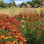 Foto di RHS Garden Harlow Carr