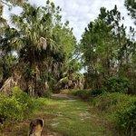 Foto de Cedar Key Museum State Park