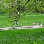Foto di Giardini di Kensington