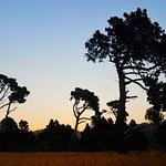صورة فوتوغرافية لـ Mendocino Coast