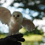 Owl flight display