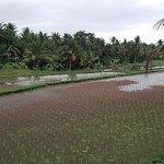Photo of Ubud Kajeng Rice Fields Walk