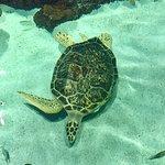 Bilde fra National Aquarium
