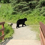 Mama and one of her cubs, the other is lagging behind.