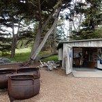 Фотография Point Lobos