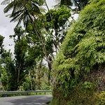 Foto El Yunque Rain Forest