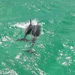 Boogies Dolphin Cruise 3