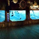 uShaka Marine World照片