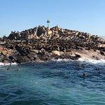 Foto di African Shark Eco-Charters