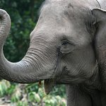 if you are interested with Asian Elephants it's better to go Sri Lanka and have a amazing tour.