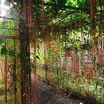 Folk Pool & Gardens Foto