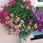 One of our lovely hanging baskets