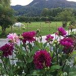 Blumen , Pferde und  im Wald Pilze sammeln sind Entspannung der Chefin