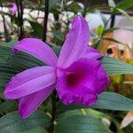 Bilde fra Botanic Gardens and Kibble Palace