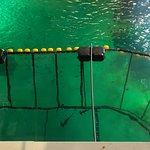 Photo of Nausicaa National Sea Centre
