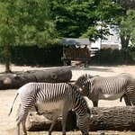 Фотография Кёльнский зоопарк