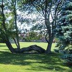 Gorgeous tree along the Cliff Walk (in front of Salve Regina University) - Newport, RI