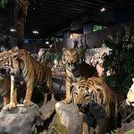 自然歷史博物館照片